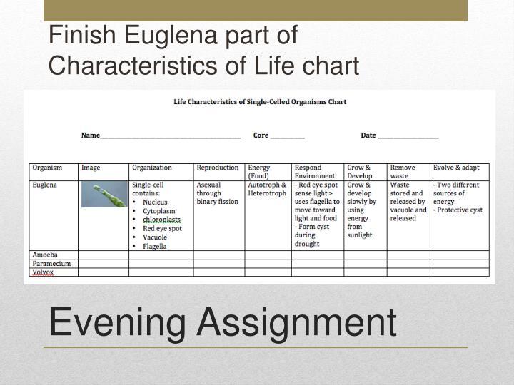 Finish Euglena part of Characteristics of Life chart