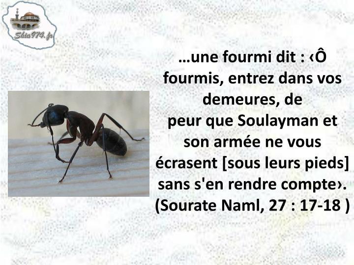 …une fourmi dit : ‹Ô fourmis, entrez dans vos demeures, de
