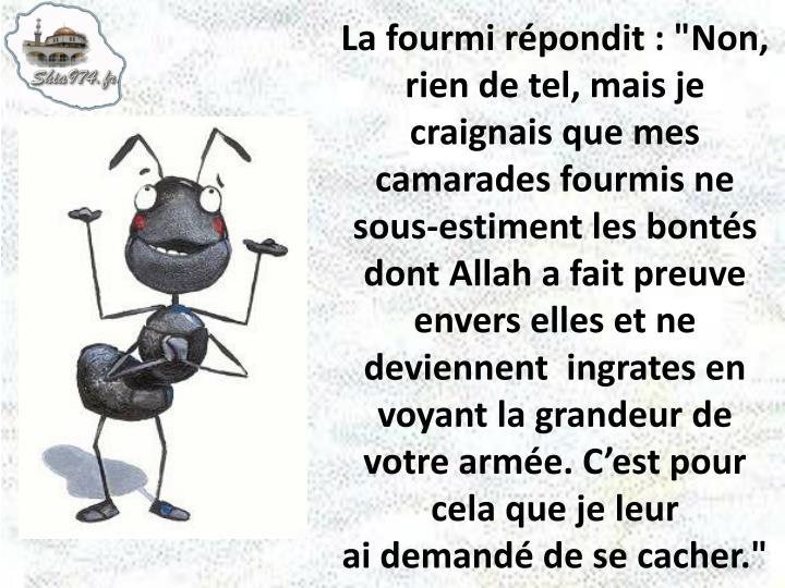 """La fourmi répondit : """"Non, rien de tel, mais je craignais que mes camarades fourmis ne sous-estiment les bontés dont Allah a fait preuve envers elles et ne deviennent  ingrates en voyant la grandeur de votre armée. C'est pour cela que je leur"""
