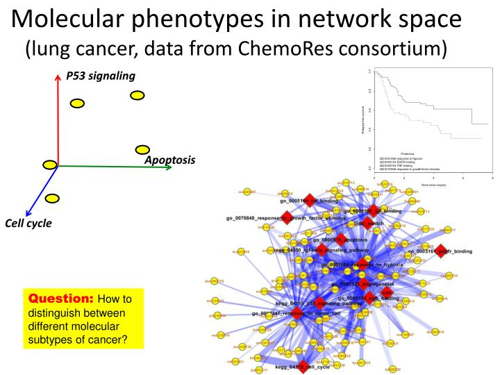Molecular phenotypes in network space