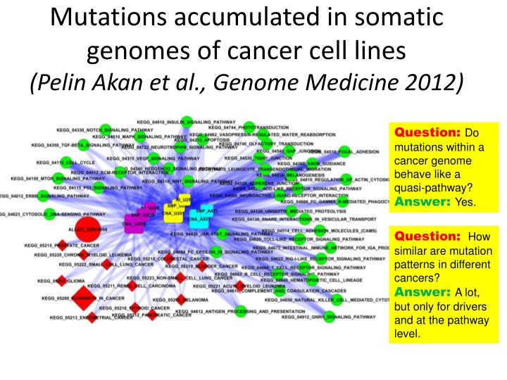 Mutations accumulated in somatic  genomes of cancer cell lines