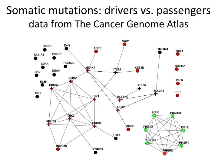 Somatic mutations: drivers vs. passengers