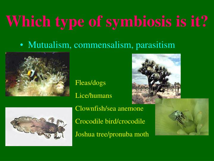 Which type of symbiosis is it?