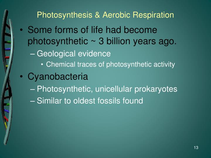 Chemosynthesis of archaea