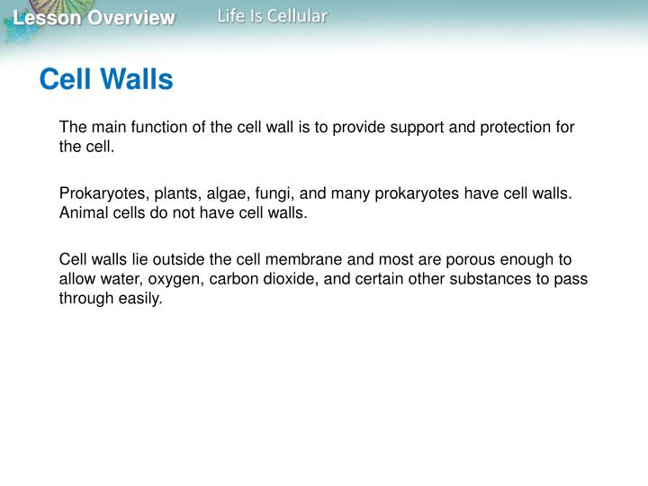 Cell Walls