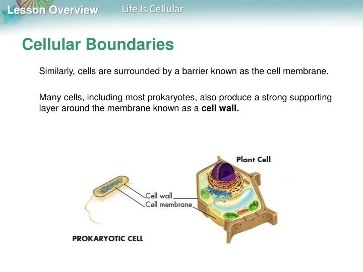 Cellular Boundaries