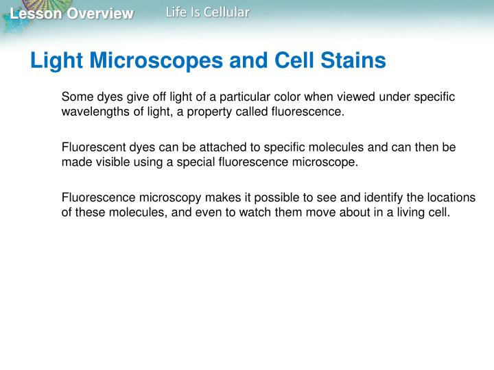 Light Microscopes and Cell Stains