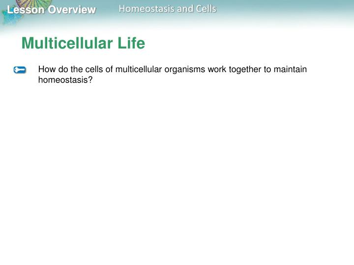 Multicellular Life