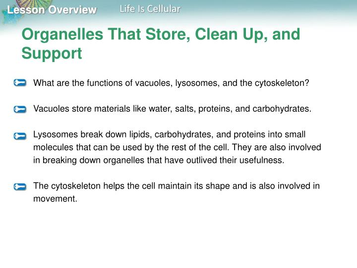 Organelles That Store, Clean Up, and Support