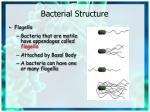 bacterial structure2