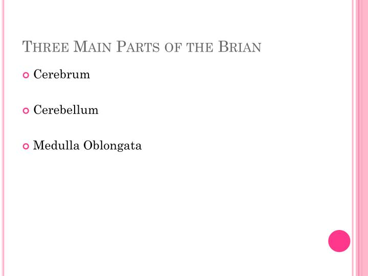 Three Main Parts of the Brian