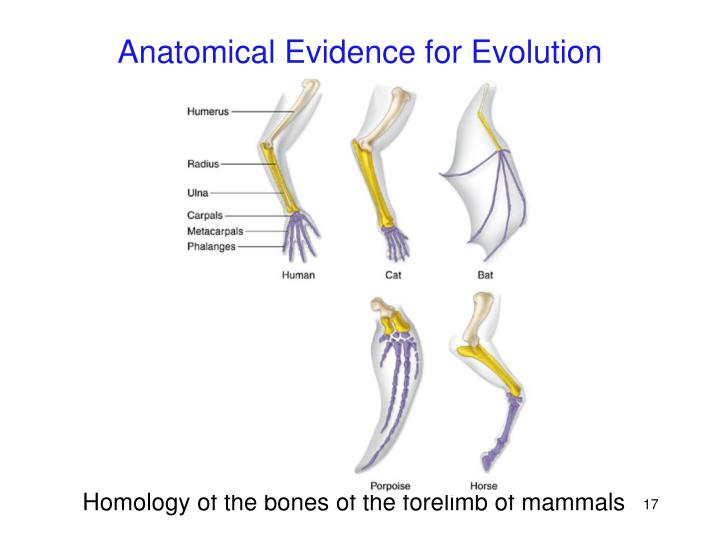 Anatomical Evidence for Evolution