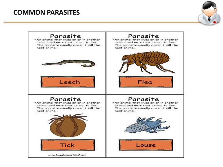 COMMON PARASITES