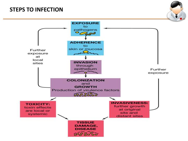 STEPS TO INFECTION