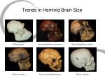 trends in hominid brain size