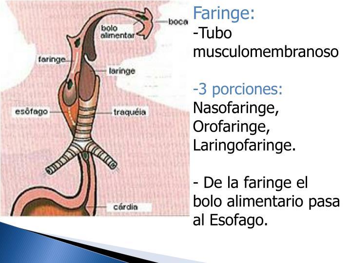 Faringe: