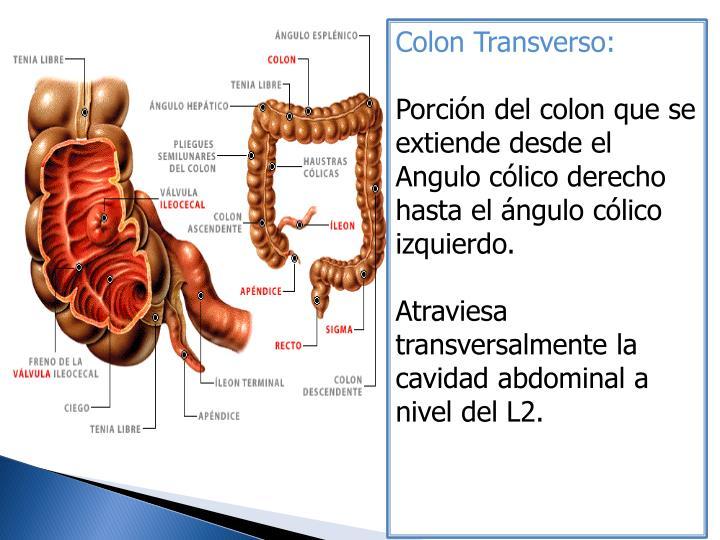 Colon Transverso: