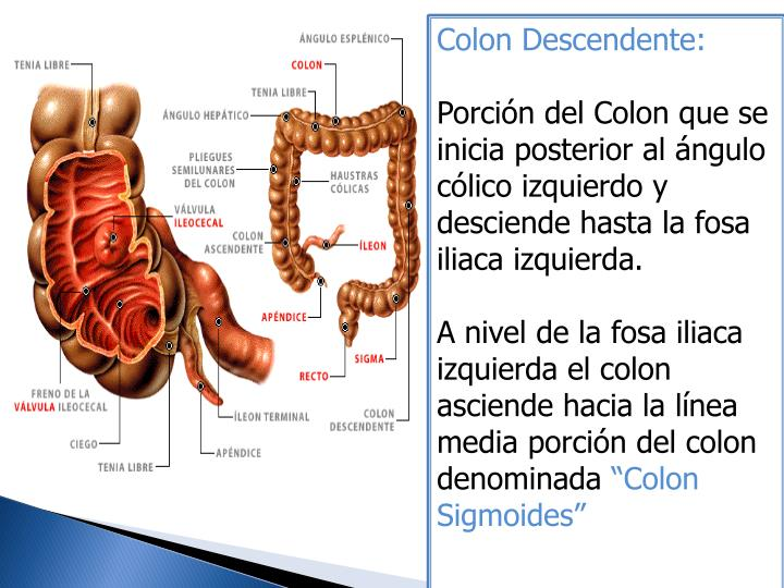 Colon Descendente:
