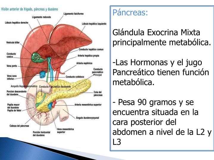 Páncreas: