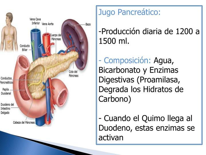 Jugo Pancreático: