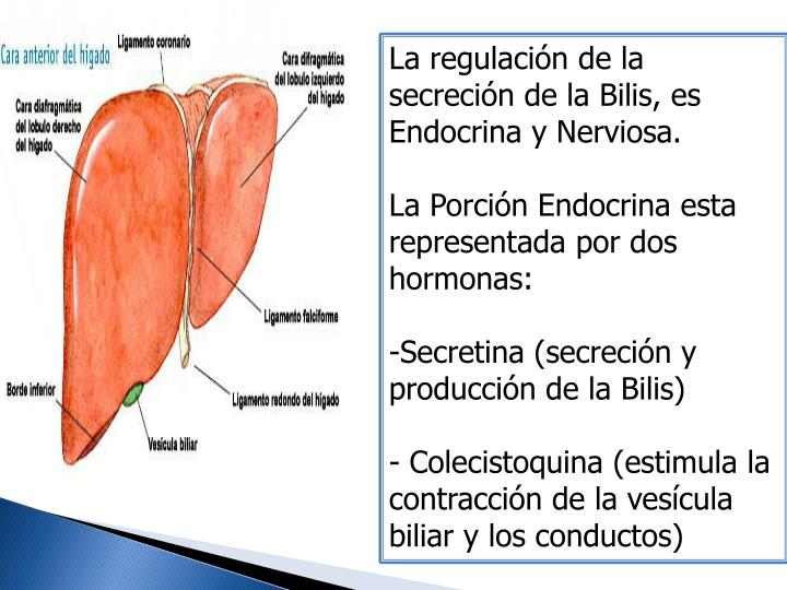 La regulación de la secreción de la Bilis, es Endocrina y Nerviosa.