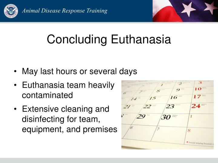 Concluding Euthanasia