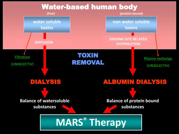 Water-based human body