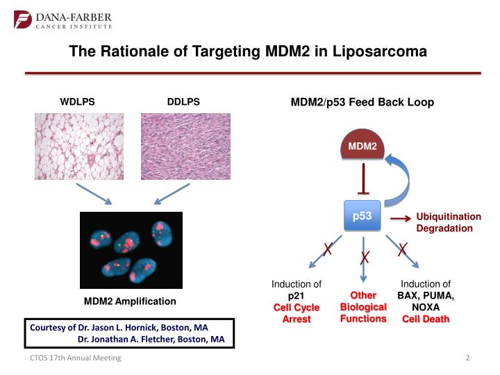 The Rationale of Targeting MDM2 in