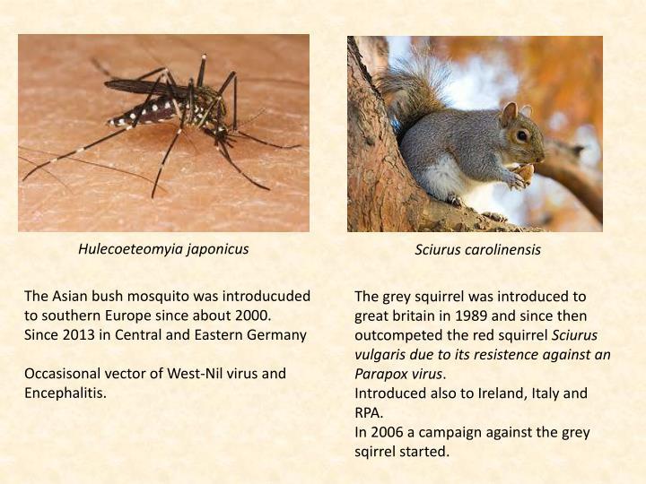Hulecoeteomyia
