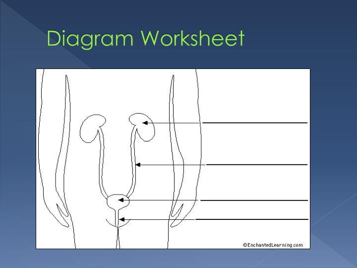 Diagram Worksheet