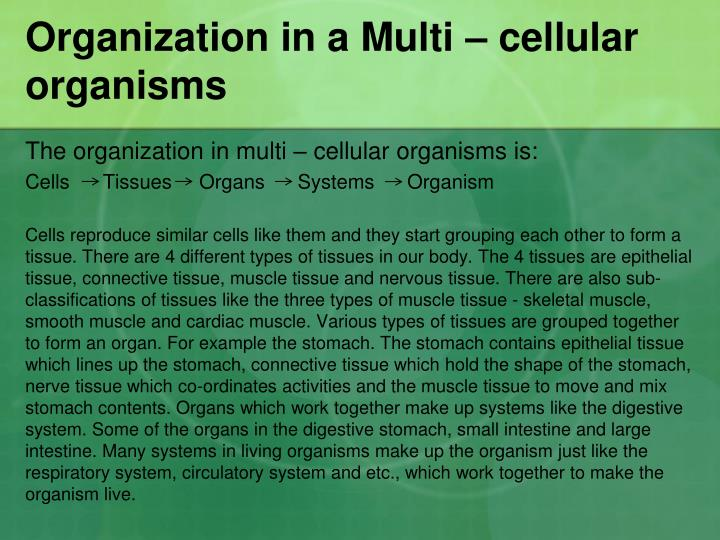 Organization in a Multi – cellular organisms