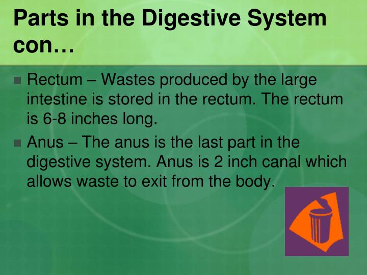 Parts in the Digestive System con…