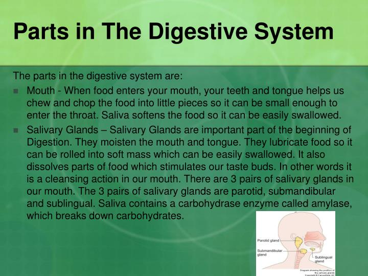 Parts in The Digestive System