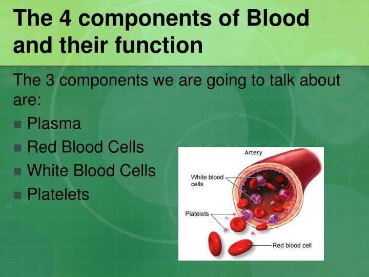 The 4 components of Blood and their function