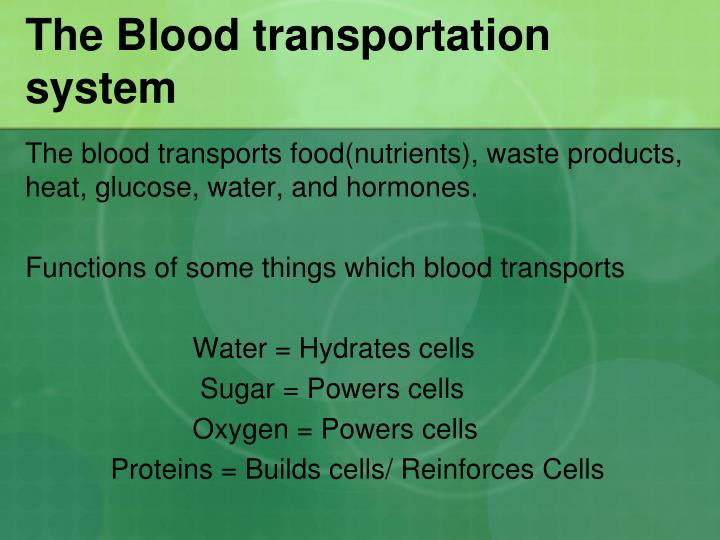 The Blood transportation system