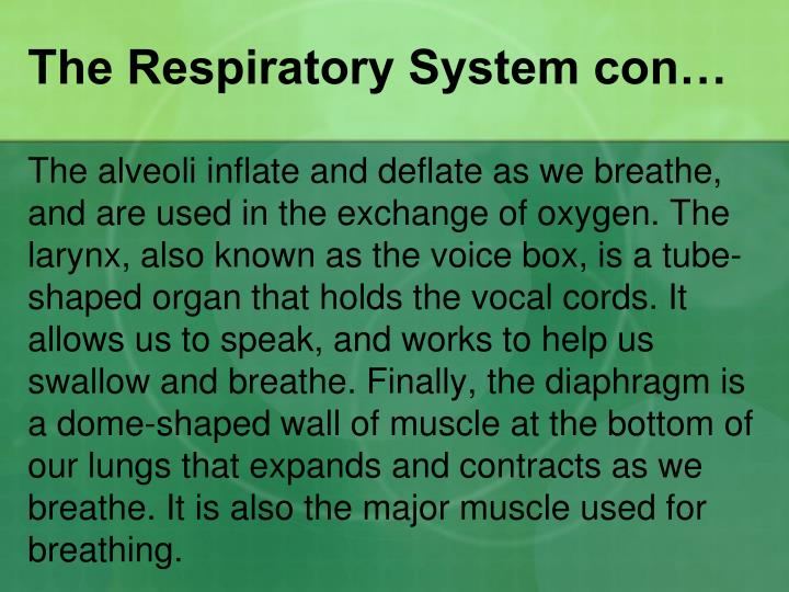 The Respiratory System con…