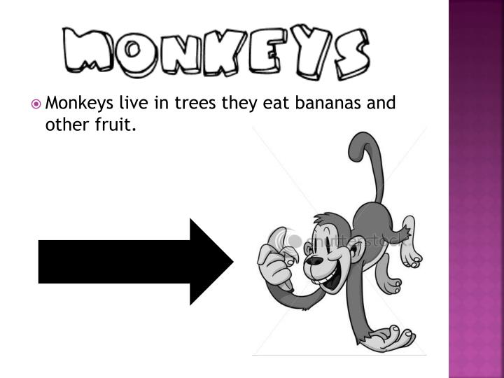 Monkeys live in trees they eat bananas and other fruit.