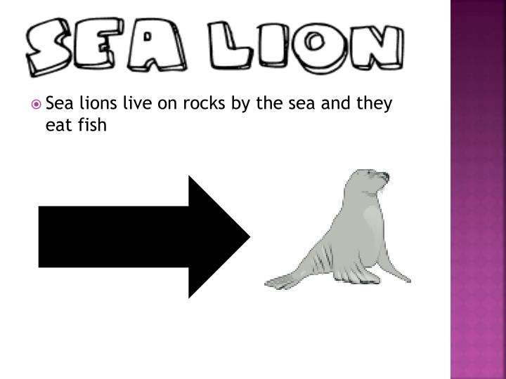 Sea lions live on rocks by the sea and they eat fish