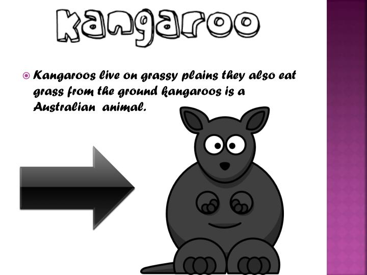 Kangaroos live on grassy plains they also eat grass from the ground kangaroos is a Australian  anima...