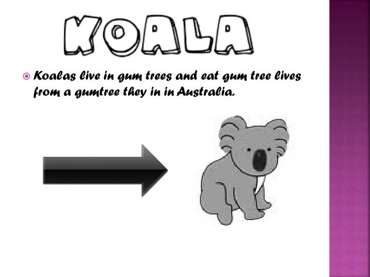 Koalas live in gum trees and eat gum tree lives from a gumtree they in in Australia.
