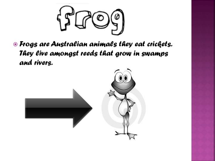 Frogs are Australian animals they eat crickets. They live amongst reeds that grow in swamps and rivers.