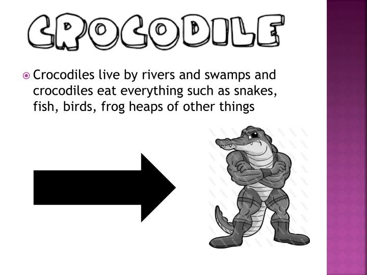 Crocodiles live by rivers and swamps and crocodiles eat everything such as snakes, fish, birds, frog heaps of other things