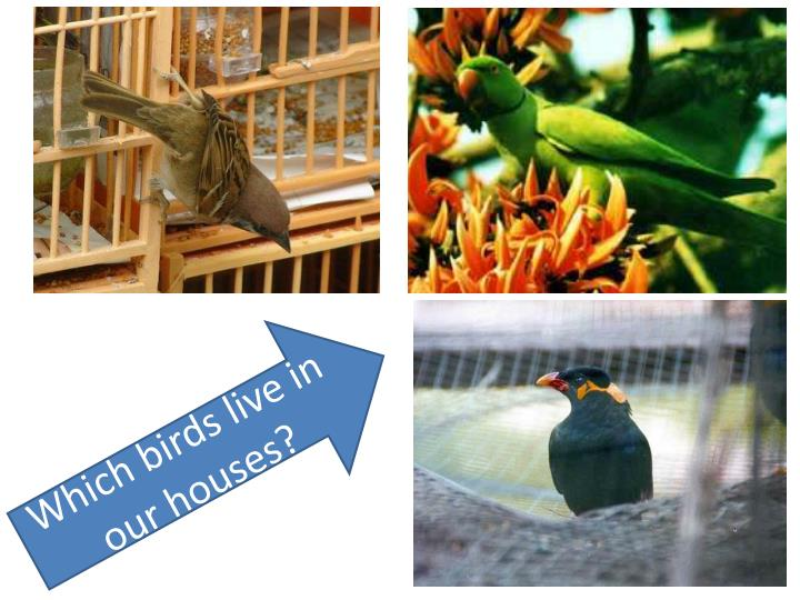 Which birds live in our houses?