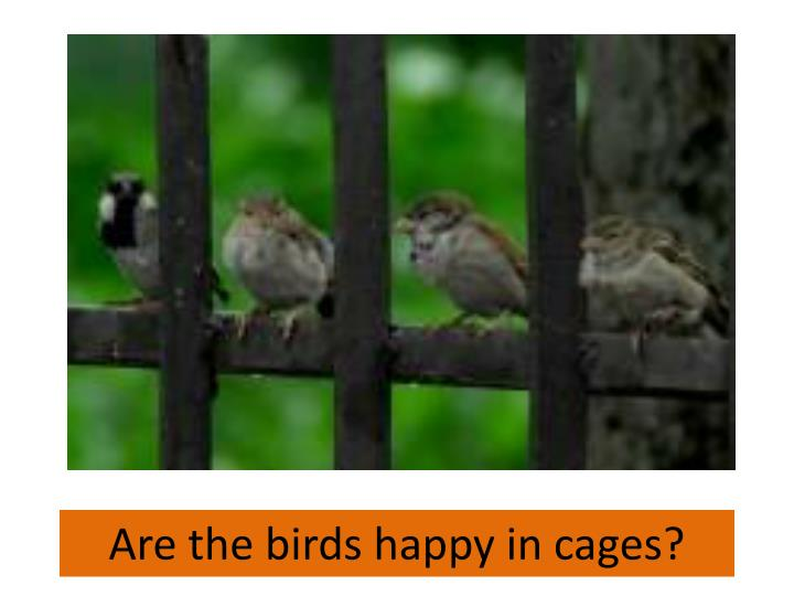 Are the birds happy in cages?