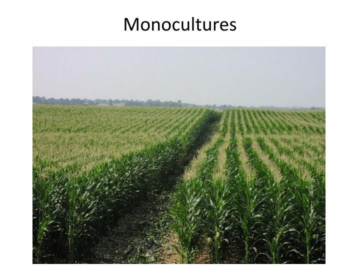 Monocultures