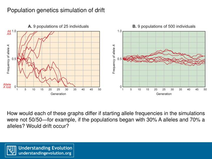 Population genetics simulation of drift