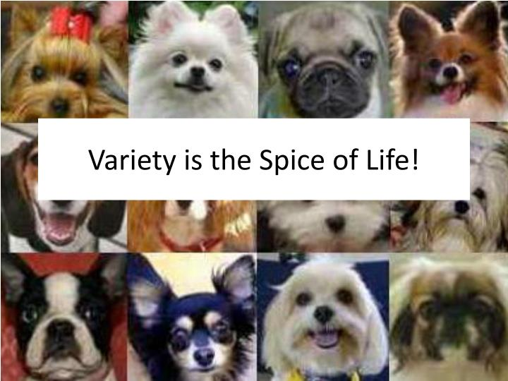 Variety is the Spice of Life!