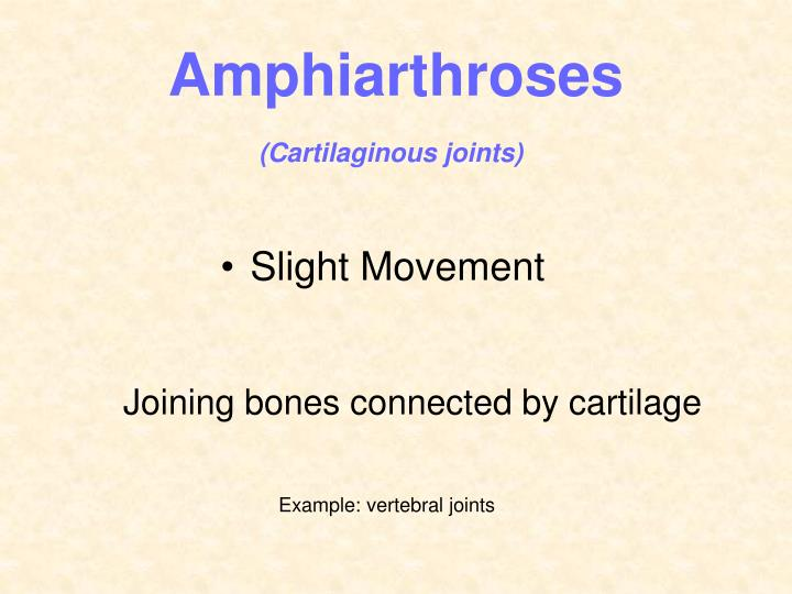 Amphiarthroses