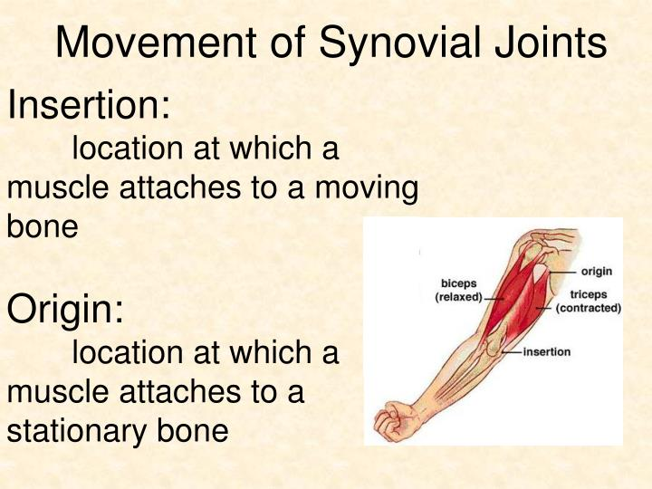 Movement of Synovial Joints