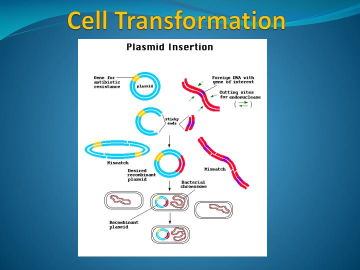 Cell Transformation